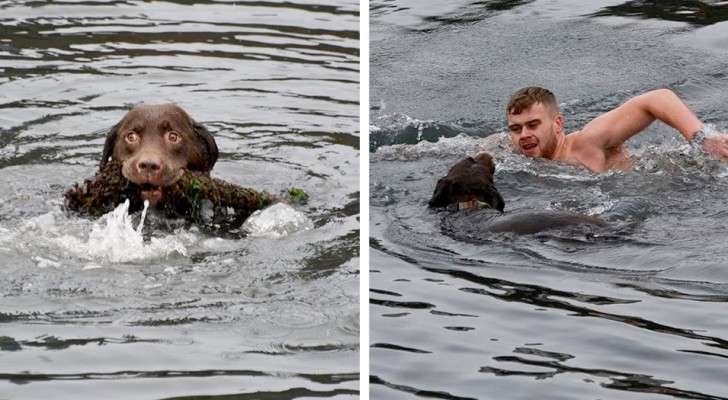A young man dives into icy waters to rescue a dog entangled in a rope