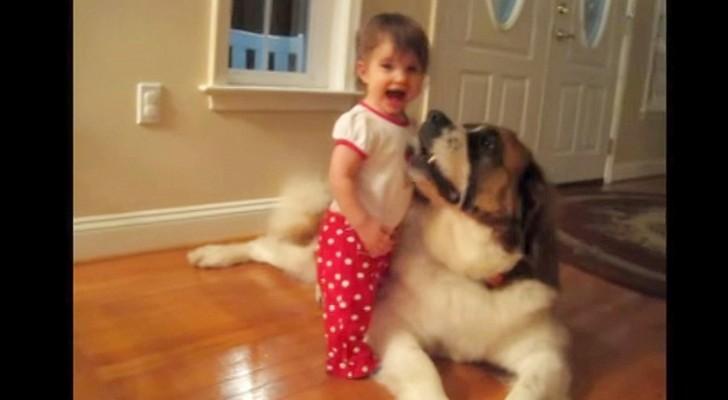 La bambina e il San Bernardo vi dimostrano che in amicizia le dimensioni non contano...