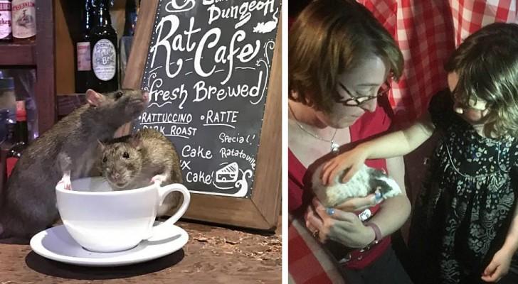 Koffie drinken omringd door muizen: in deze bar kunnen tientallen knaagdieren vrij rondlopen tussen de tafels