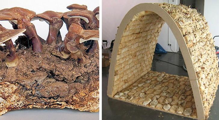 Un uomo inventa dei mattoni fatti con i funghi: più robusti del cemento e ottimi per costruzioni sostenibili