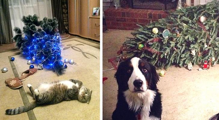 17 animali domestici che non hanno saputo resistere alla tentazione di rovinare il Natale