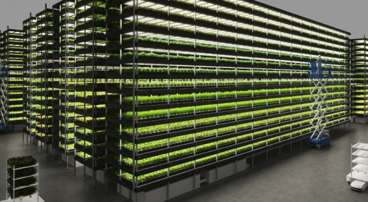 Questo orto verticale alimentato ad energia eolica produrrà mille tonnellate di verdura all'anno