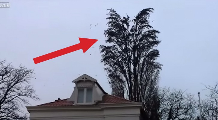 WOW ! Look at this huge group of birds flying off this tree !!