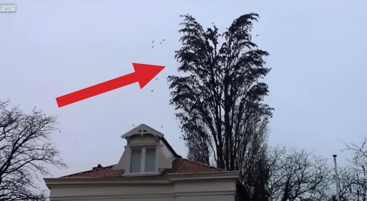 Vi sembrerà solo un albero pieno di uccelli, ma poco dopo... resterete a bocca aperta!