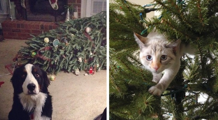 20 pets who couldn't help picking a fight with the Christmas tree