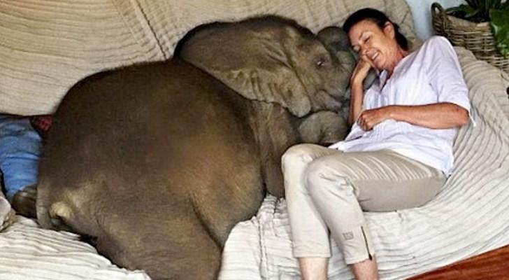 En kvinna räddar en elefantkalv och mellan dem föds ett mycket starkt band, han blir hennes skugga