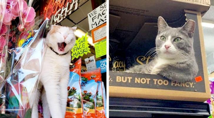 15 gatos que han invadido los pasillos de los negocios y no tienen ninguna intención de irse