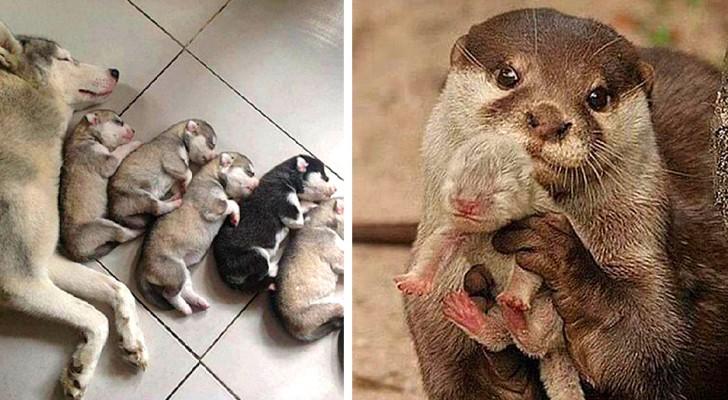 Moederliefde op vier poten: 17 foto's van moeders met hun prachtige kleintjes
