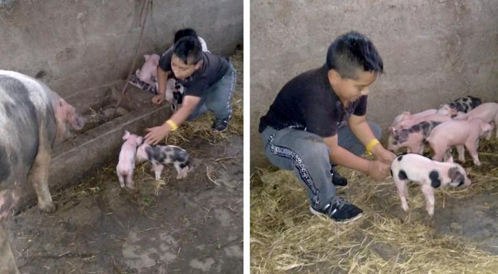 Non riesce a finire i compiti scolastici per aiutare a partorire il suo maialino: la maestra lo perdona