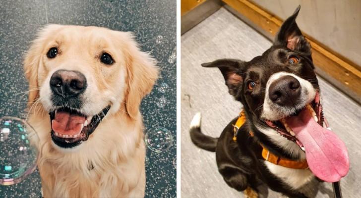 20 foto di cani incredibilmente felici e rilassati che ti strapperanno immediatamente un sorriso