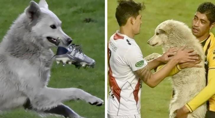 Un cane randagio si intrufola in campo ed interrompe una partita di calcio: uno dei giocatori decide di adottarlo