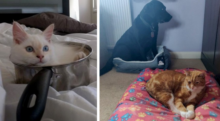 18 cats who have chosen the most absurd and unthinkable places in the house as their beds
