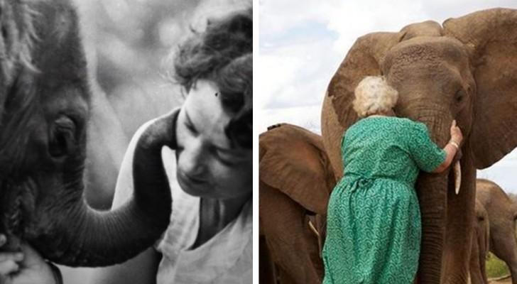 Esta mujer se encargó de cuidar los elefantes huérfanos por muchos años: ellos la aman como un miembro de la manada