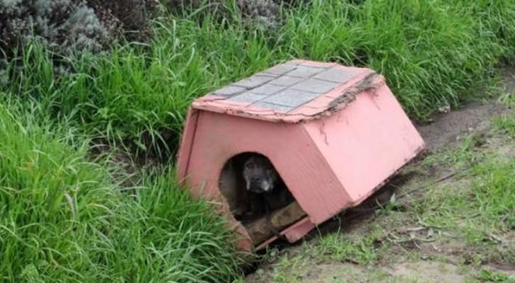 Un cane viene abbandonato in strada con la sua cuccia: ha atteso pazientemente qualcuno che lo salvasse