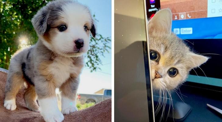 17 fotos de animais de estimação capazes de derreter até o coração mais insensível com tanta ternura