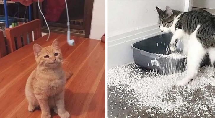 21 photos hilarantes démontrent parfaitement à quel point les chats sont des canailles à quatre pattes