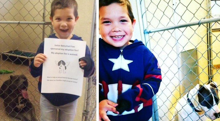 A 4-year-old boy wants to save 2 Pitbulls from a shelter but the state won't allow him: he adopts them remotely