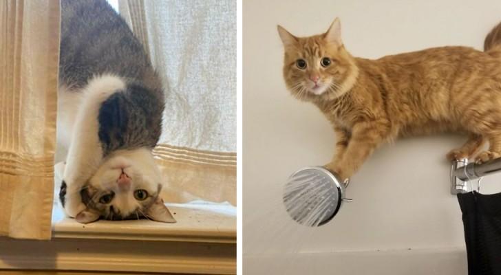 17 huiskatten die niets anders doen dan zich enigszins bizar en verontrustend gedragen