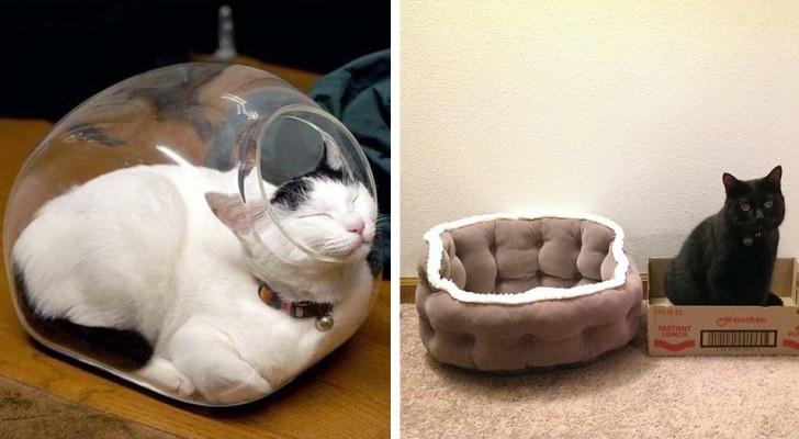 20 photos amusantes de chats malicieux qui ont préféré dormir dans des couchettes alternatives sans logique apparente