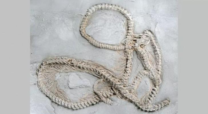 In Germania è stato identificato il fossile di pitone più antico al mondo: ha 47 milioni di anni