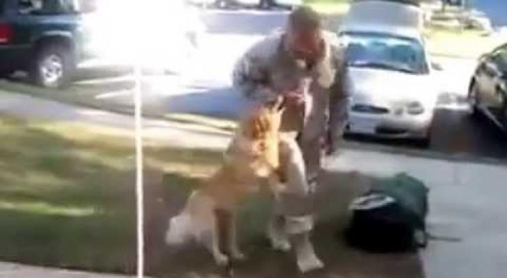 Cane rivede il suo padrone dopo 2 anni