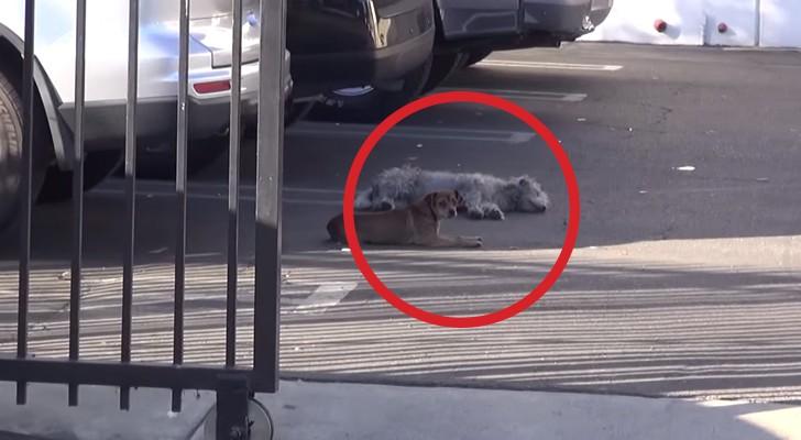 Chegar perto destes dois cães era quase impossível, até que acontece um milagre