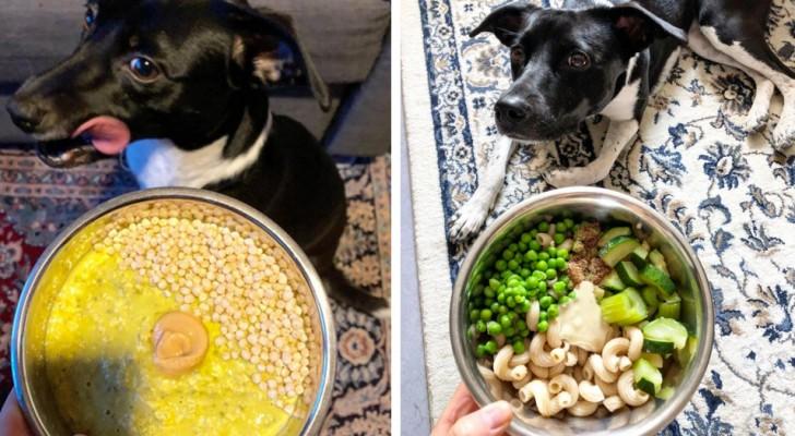 Eine junge Frau ernährt ihre Hündin vegan und rät allen, das Gleiche zu tun