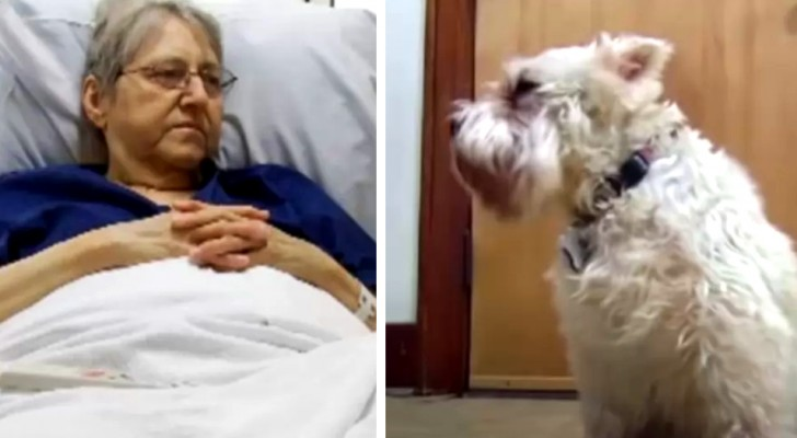 Cagnolina raggiunge l'ospedale dove è ricoverata la padrona senza conoscere la strada: sentiva la sua mancanza