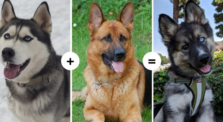 15 Hunde mit faszinierenden und ungewöhnlichen Eigenschaften zeigen das Ergebnis der Kombination verschiedener Gene