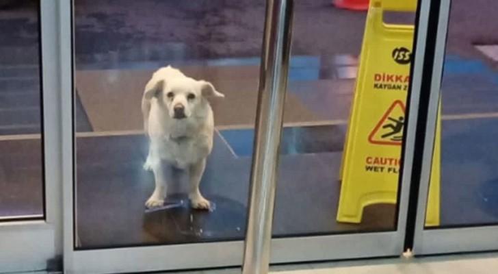 Dit trouwe hondje wachtte 6 dagen voor de ingang van het ziekenhuis op zijn opgenomen baasje