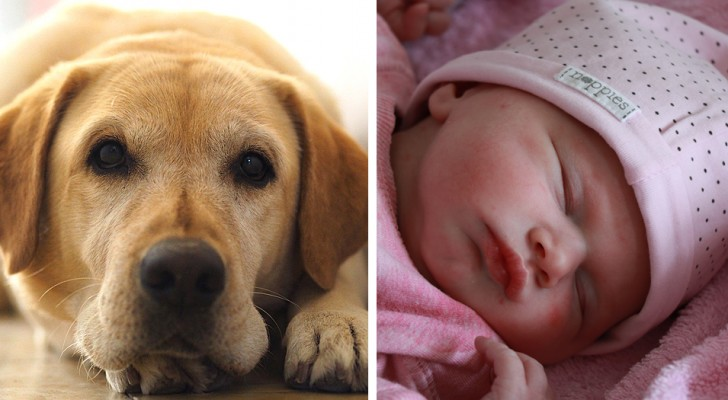 Une femme enceinte demande à une amie de changer le nom de son chien :