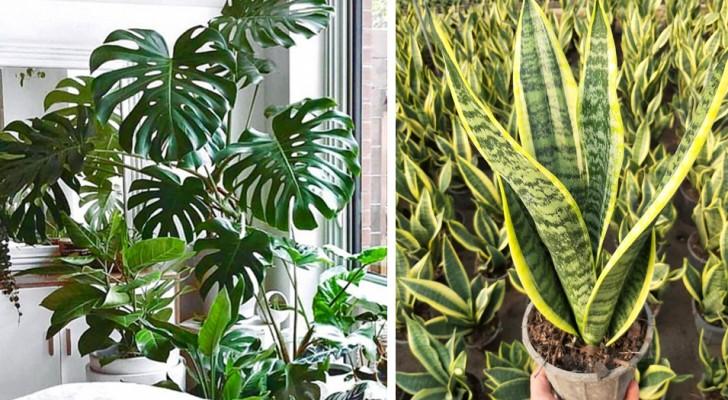5 Zimmerpflanzen, die sehr einfach zu pflegen sind, auch für Anfänger geeignet