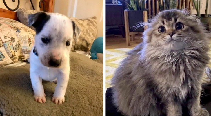 15 photos that show what great medicine our pets can be