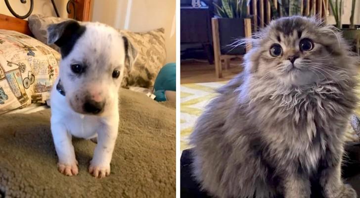15 bilder som visar hur våra husdjur kan vara botemedlet mot vårt dåliga humör