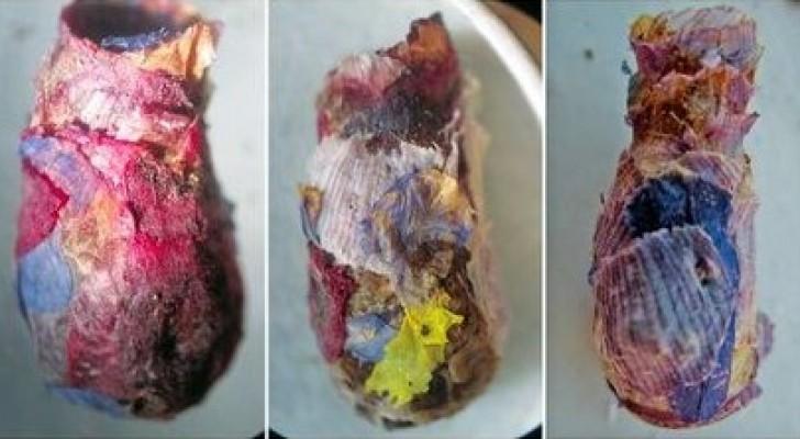 Una rara specie d'ape crea i nidi utilizzando petali di fiori diversi: sono piccole opere d'arte