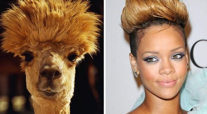 15 leuke dierenfoto's die ongelooflijk veel op beroemdheden lijken