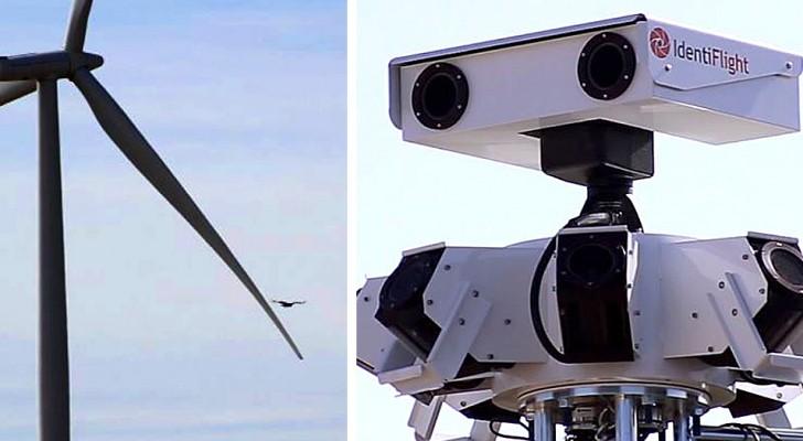 Queste telecamere super-intelligenti proteggeranno le aquile e gli altri uccelli dalle pale eoliche