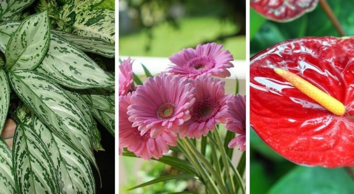 5 splendide piante perfette da coltivare in casa che daranno un tocco unico ai vostri ambienti