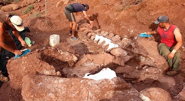 In Patagonië zijn de overblijfselen van een titanosauriër ontdekt: het zou het grootste landdier kunnen zijn dat ooit heeft bestaan