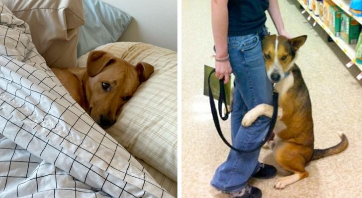 Angeli a quattro zampe: 15 cani che si sono meritati il titolo di migliori amici dell'uomo