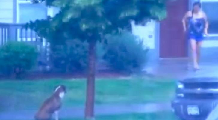 Um cão foi ESQUECIDO na chuva: olha o que a vizinha faz