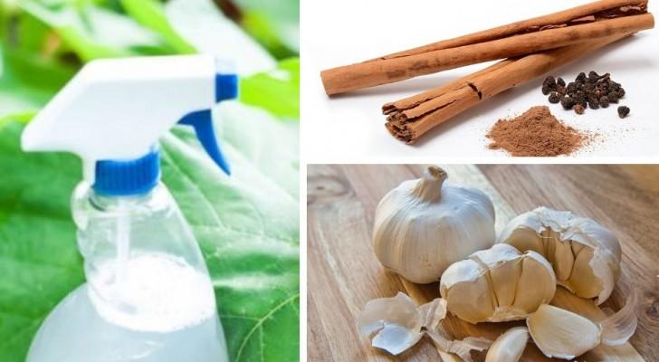 Il rimedio naturale fai-da-te per preparare uno spray contro gli insetti da usare in casa o in giardino