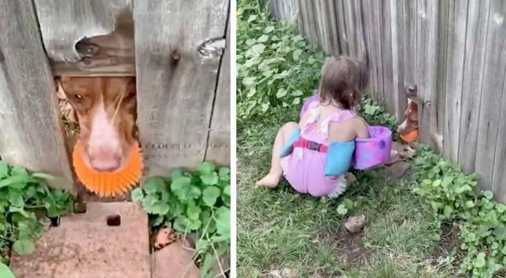 Il cane fa un buco nel recinto per poter giocare con la sua palla preferita assieme alle bimbe dei vicini