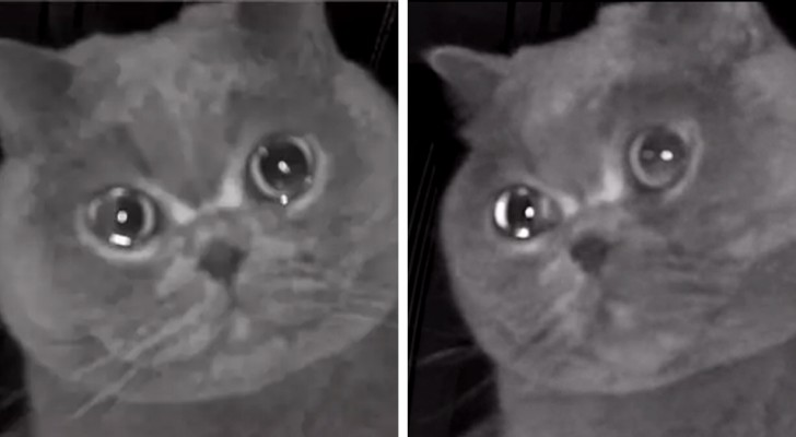 She leaves the cat home alone but then sees him