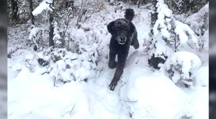 Laufender Mann oder Hund? Diese optische Täuschung kann viel über unseren Geisteszustand verraten