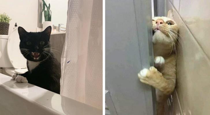 19 foto di gatti a cui non importa assolutamente nulla dello spazio personale dei padroni