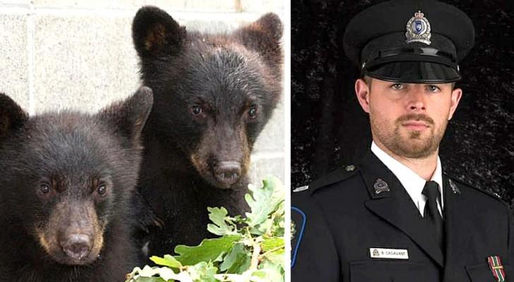 Sospendono un agente perché si rifiuta di uccidere due piccoli orsi: è andato contro agli ordini ricevuti