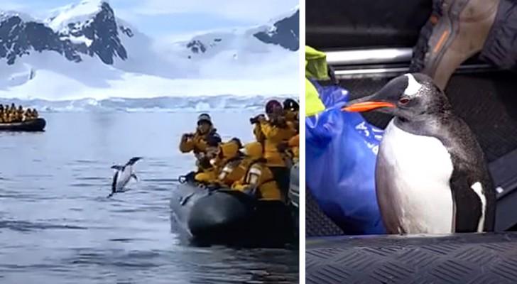 Ein von Killerwalen gejagter Pinguin rettet sich durch einen Sprung auf ein Boot: Das Video lässt Sie atemlos zurück