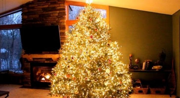 Er sieht wie ein ganz normaler Weihnachtsbaum aus, doch er versteckt ein explosives Geheimnis!