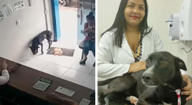 Hund in Schwierigkeiten betritt allein Tierarztpraxis und 'bittet Ärzte um Hilfe'
